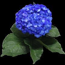 DARK BLUE SPLATERED WHITE # 2.5.8